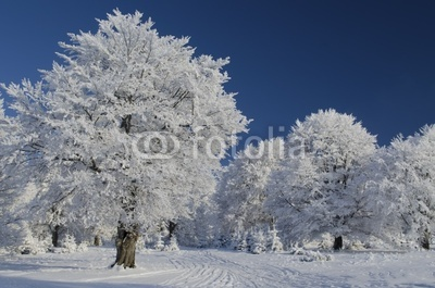 Snow tree under blue sky