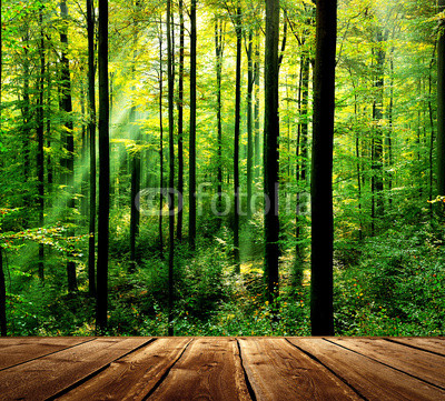 Fresh green forest with sunbeams and wooden floor